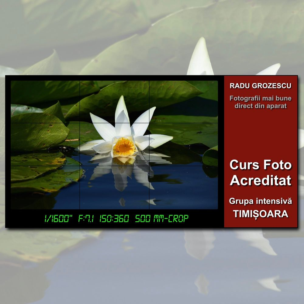 Curs-foto-acreditat-Timisoara